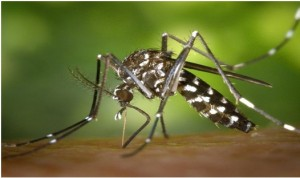 Болезнь, вызванная вирусом Зика  и меры её профилактики